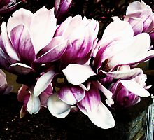 magnolias by kagi
