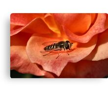Hover Fly Macro Canvas Print