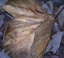 leaf ahoy by carol oakes