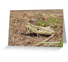 Grasshopper Greeting Card