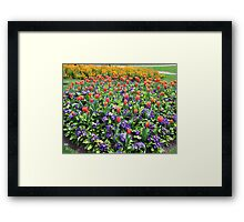 Tulips On Display (2) Framed Print