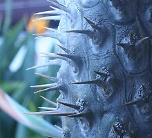 Spikes by Neil Baffert