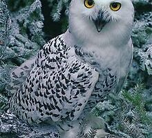 snow owl by shkaabewis06