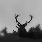 Highland stag and his ladies by orchidcat