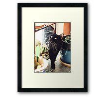 Mr. Mister  Framed Print