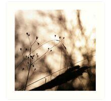 .: Sunday, lazy sunday :. Art Print