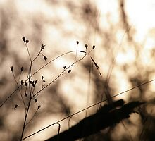 .: Sunday, lazy sunday :. by Sophie Cagnac