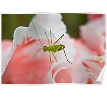 Grasshopper on Pink Flower Poster