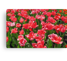 Pretty Flowers Canvas Print