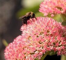 Bee on a flower by Yaroslav  Williams