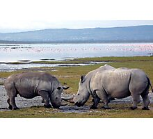 Heavy weights line up by Lake Nakuru Photographic Print