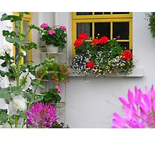 Cottage Window and Flowers Photographic Print