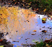 Autumn by Vincent Teh
