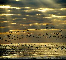 Sunrise on Ocracoke Island, North Carolina USA by Jeremiah Keenehan