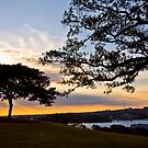 Sunset at Observatory Hill, Sydney by Sheila  Smart