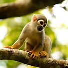 amazon monkey by Derek McMorrine
