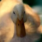 Fuzzy Duck by saleire
