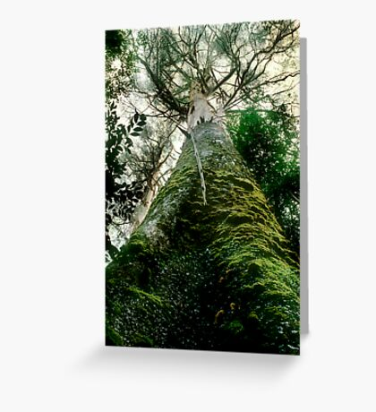 Old Growth Mountain Ash Greeting Card