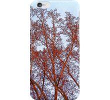 Tulip Tree in Winter Sunset iPhone Case/Skin