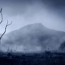 Tree in the morning mist. by David Amos