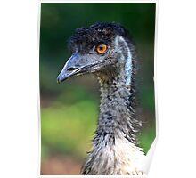 Australian Emu Poster