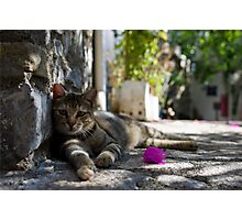 Cat lounging in a Turkish old town Photographic Print