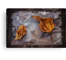 Withered on Slate Canvas Print