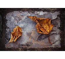 Withered on Slate Photographic Print