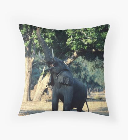 Browsing in the lower branches  Throw Pillow