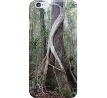 Strangler fig in Noosa National Park iPhone Case/Skin