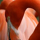 Flamingo 1 by Bridget Vander Veen