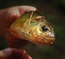 Jon's First Fish by Davis