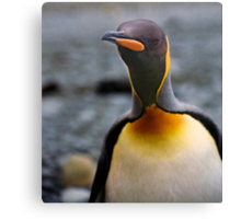 King Penguin Up Close & Personal Canvas Print