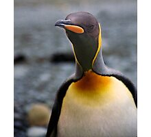 King Penguin Up Close & Personal Photographic Print