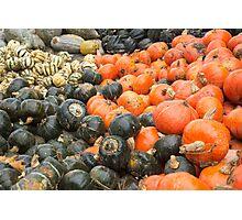 pumpkin varities Photographic Print
