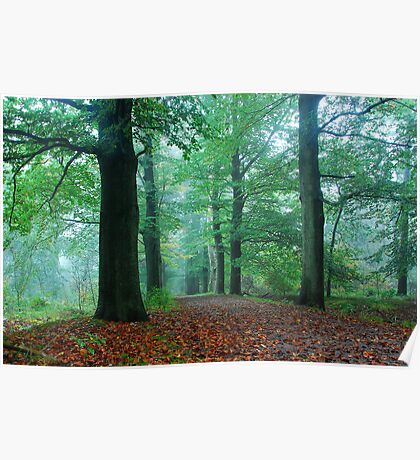 A green October forest path Poster