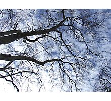 Reaching to Heaven Photographic Print