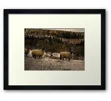 Are Ewe Cold?.... Framed Print