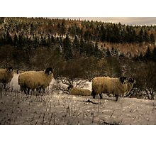 Are Ewe Cold?.... Photographic Print