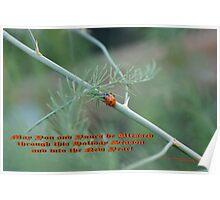 Holiday Blessings; Ladybug on asapragus - La Mirada, CA USA Poster