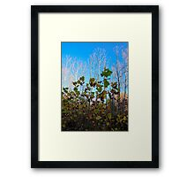 Sycamore Trees Framed Print