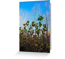 Sycamore Trees Greeting Card