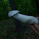 Mushroom Tip? by hallucingenic