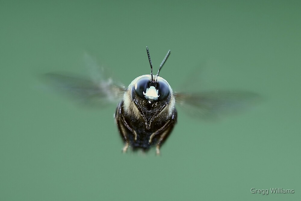 Bee in flight by Gregg Williams