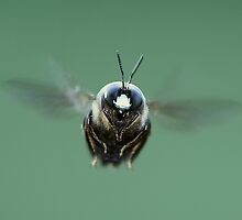Bee in flight by Gregg Williams