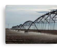 Watering the field Canvas Print
