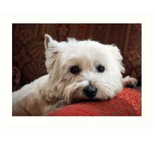 Molly the Westie Art Print