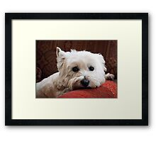 Molly the Westie Framed Print