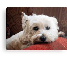 Molly the Westie Metal Print