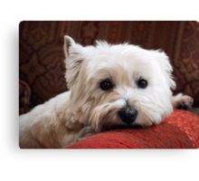 Molly the Westie Canvas Print